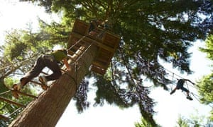 Leap about like an ape in Grizedale forest