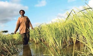 Florence Ameza was able to expand her rice farm, thanks to the local VSLA