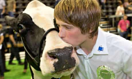 Germany's most beautiful cow