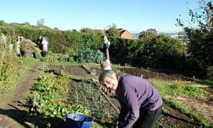 Gardening at Sage Greenfingers allotment