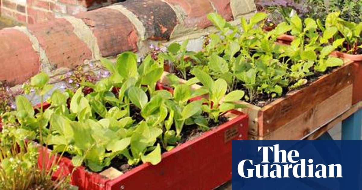 Vertical Veg Man On Container Gardening Choosing The Perfect Pot