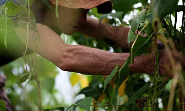oak tree low carbon farm fruit picking