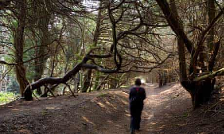 Ancient forest in Sussex
