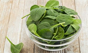 Grow your own: glass bowl of fresh baby spinach on a grunge white painted wood background