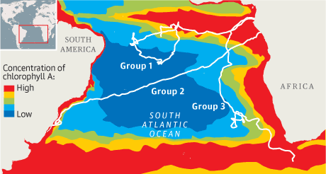 Map - turtle migration