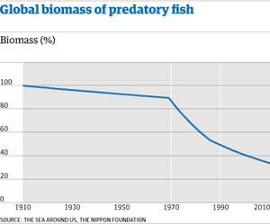Global biomass of predatory fish