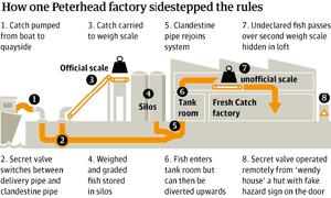 Black fish factory graphic