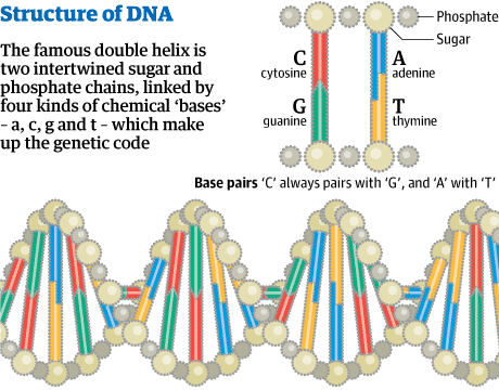 DNA double helix: discovery that led to 60 years of