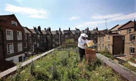 Beekeeper John Chapple installs a new bee hive on an urban rooftop garden in Hackney, London