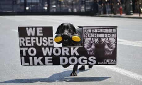 A protest dog during the May Day demonstrations in Athens, Greece