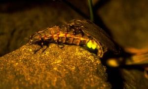 Glow worm survey in Peak District