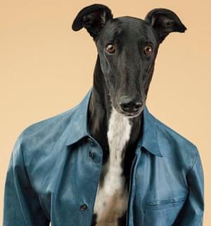 Trussardi greyhounds