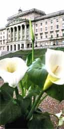The Northern Ireland assembly, recalled from recess because of a row over the decision to display Easter lilies inside Stormont
