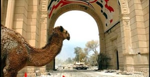 US tanks at the presidential complex in Baghdad with only a camel for company