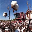 Combine gathers cotton