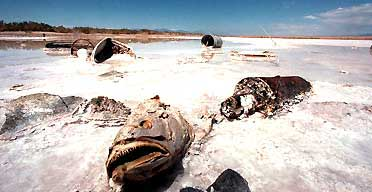 A dead fish lies on salt sediment at the edge of the Salton sea, in southern California, where salinity levels are 25% higher than those of ocean water