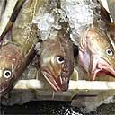 North sea cod lie in their bins at Peterhead fish market in north-east Scotland