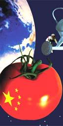 Space tomato