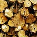 Logged trees