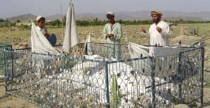 Three brothers of Dilawar, who died in US custody 18 months ago, pray at his grave in Yaqubi, Afghanistan. Photograph: Stringer/Reuters
