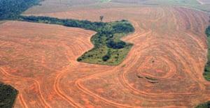 An area of the Amazonian rainforest cleared by soya bean farmers in Novo Progreso, Brazil. Photograph: Alberto Cesar/Greenpeace/AP