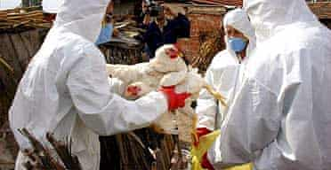Vets collect chickens to cull in a bid to fight an outbreak of bird flu in Kiziksa village, north-west Turkey