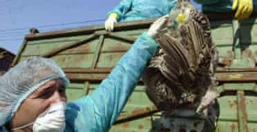 Vets collect birds in Romania