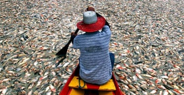 A man on Lagoa dos Reis paddles across a blanket of dead and dying fish. Photograph: Marcio Silva/AP