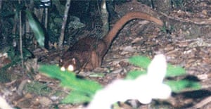 The mysterious new creature found in Borneo
