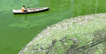 Rubbish collects along a boom on a polluted Beijing canal. Photograph: AP