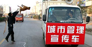 An official throws a dog that has been clubbed to death onto a collection truck in Mouding
