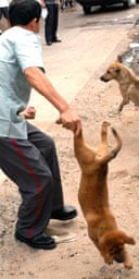 A Chinese security guard rounds up dogs for culling as part of a campaign against the spread of rabies.