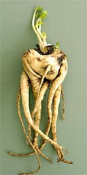 The parsnip that was declared England's ugliest vegetable