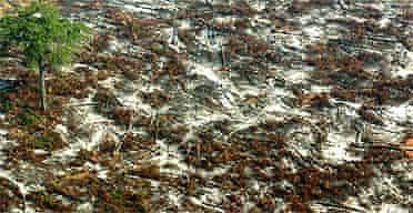 Devastated jungle in the Amazon basin