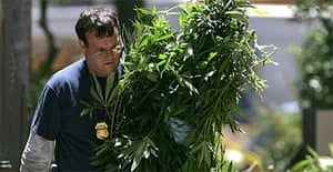 A pile of marijuana plants are seized by police in San Francisco, California
