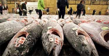 Fishmongers inspect frozen tuna at a Tokyo market