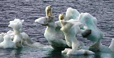 Polar bears stand on top of a chunk of ice in the arctic off northern Alaska