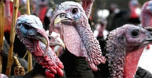 All the turkeys on the affected farm near Lowestoft will be culled
