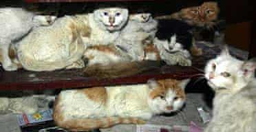Some of the 400 cats that were rescued from a market in Tianjin