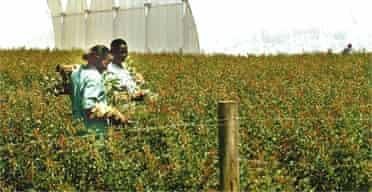 Flower growers in Kenya