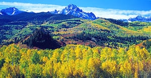 The balance of pine and aspen in White River national forest could be lost as a result of a Colorado beetle infection