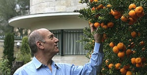 The Israeli prime minister, Ehud Olmert, examines clementine trees in the garden of his official residence in Jerusalem.