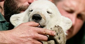 Knut, the Berlin zoo baby polar bear, sucks the thumb of one of the zookeepers