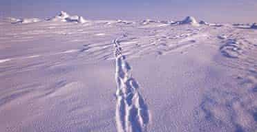 North Pole, Arctic