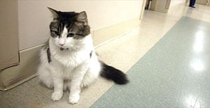 Oscar the cat, who seems to have an uncanny knack for predicting when nursing home patients are going to die