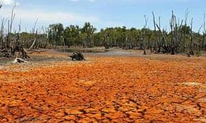 Algae stained mud carpets the drought ravaged Gayngaru wetlands of Arnhem Land in Australia's Northern Territory