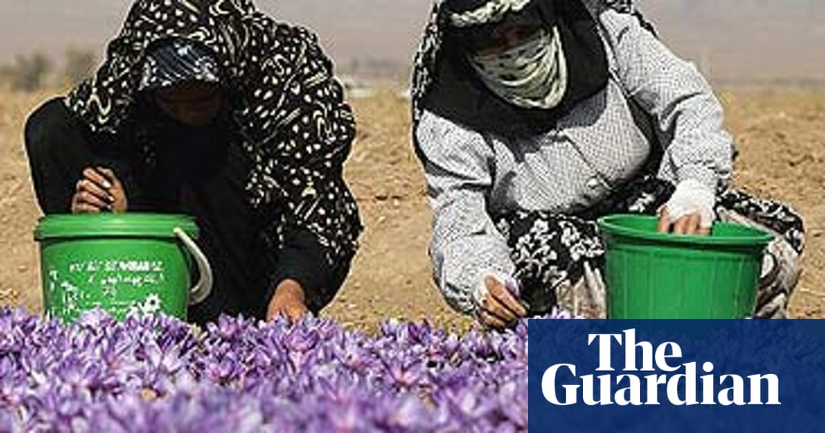 Pay Boost For Saffron Pickers Casts Cloud Over 3 000 Year Old