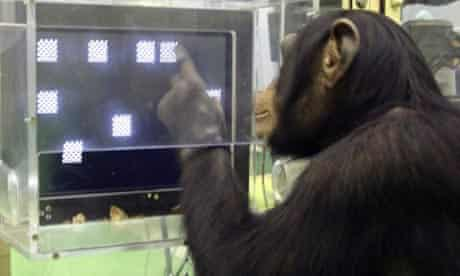 A chimpanzee named Ayumu takes a memory test at the Primate Research Institute in Kyoto, Japan