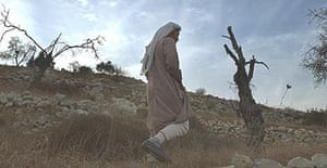 A Palestinian villager passes olive trees burned and cut by militant Jewish settlers at Einabus, on the West Bank.