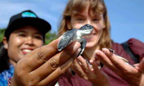 Environmental activists release turtles at a beach near the venue of the UN climate change conference in Bali